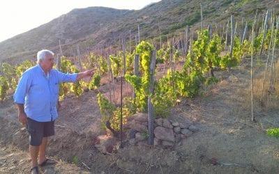 """Francesco Carfagna: da viticoltore eroico a """"palazzinaro"""" del vino"""