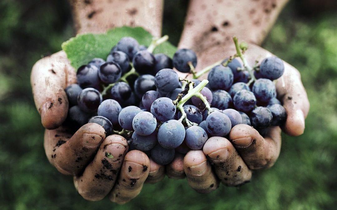 Vini Naturali: oggi zittisco i talebani… mentre mi bevo un vino Bio ?