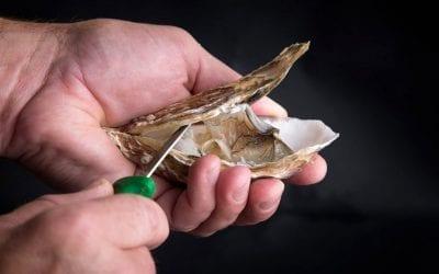 Ostriche: cosa sono, come si coltivano, riconoscerle, abbinarle