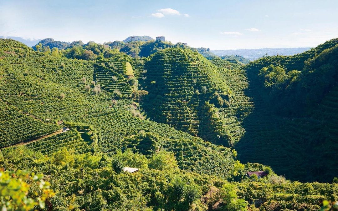 Prosecco Valdobbiadene Superiore Cartizze DOCG: 5 differenze