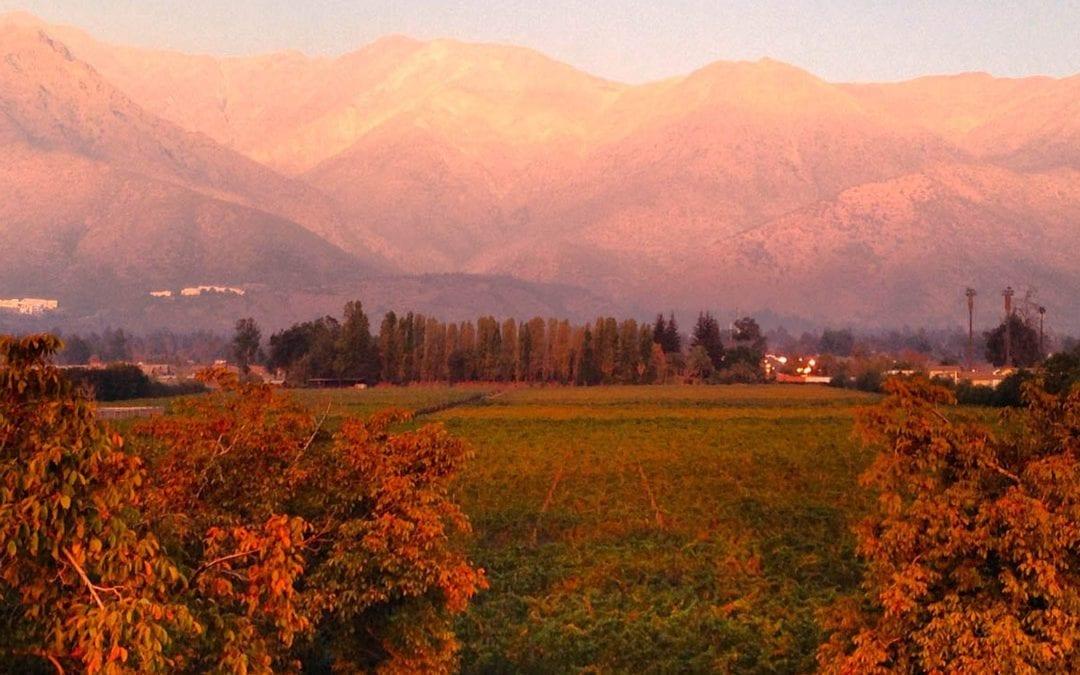 Cile: vitigni, pratiche vinicole e vini