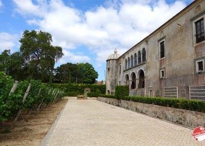 bacalhoa-vini-portoghesi-vinhos-27
