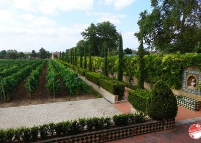 bacalhoa-vini-portoghesi-vinhos-28