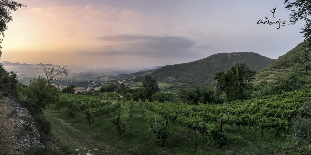 vigna vigneto colli berici adagio vini