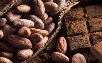 Dal cacao al cioccolato: vino, vermuth o distillato?