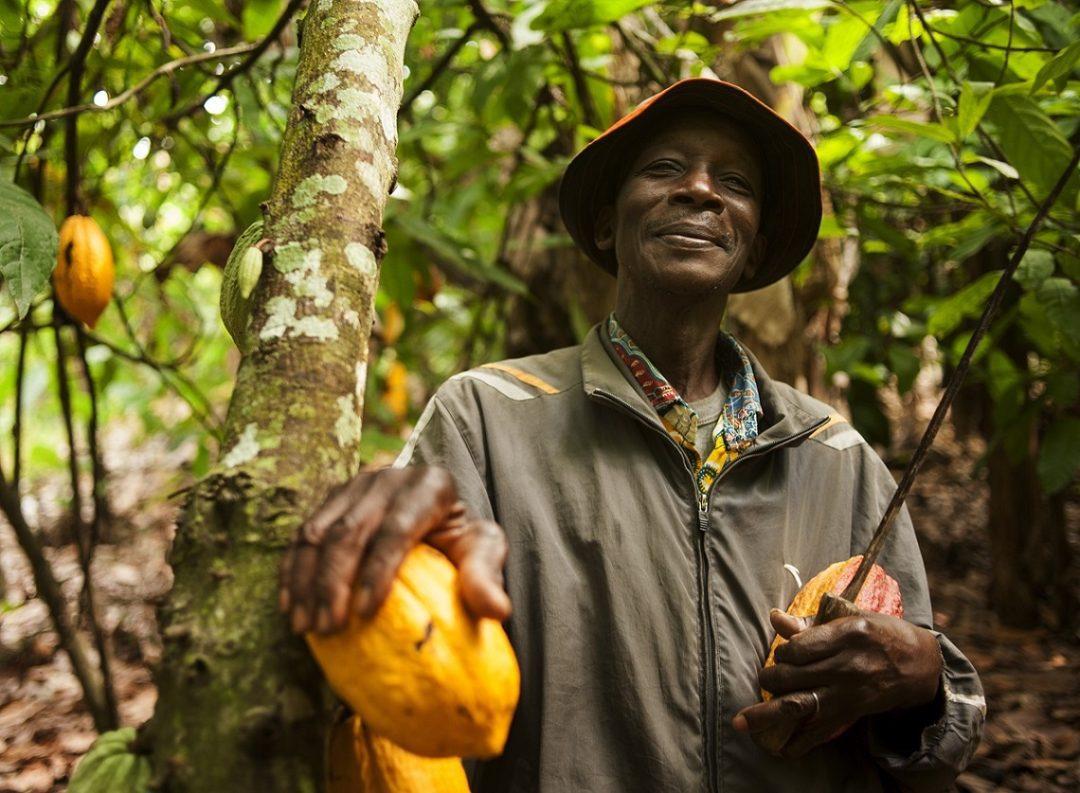 produzione cacao
