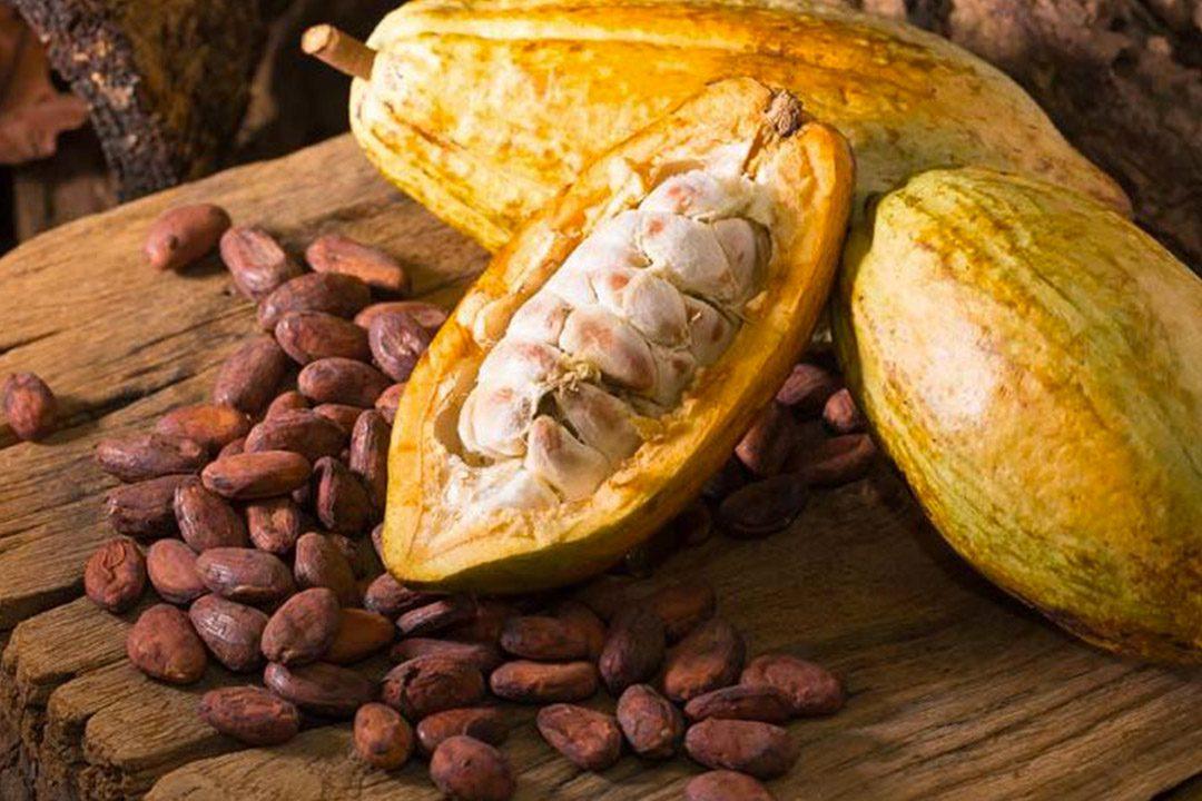 semi cacao