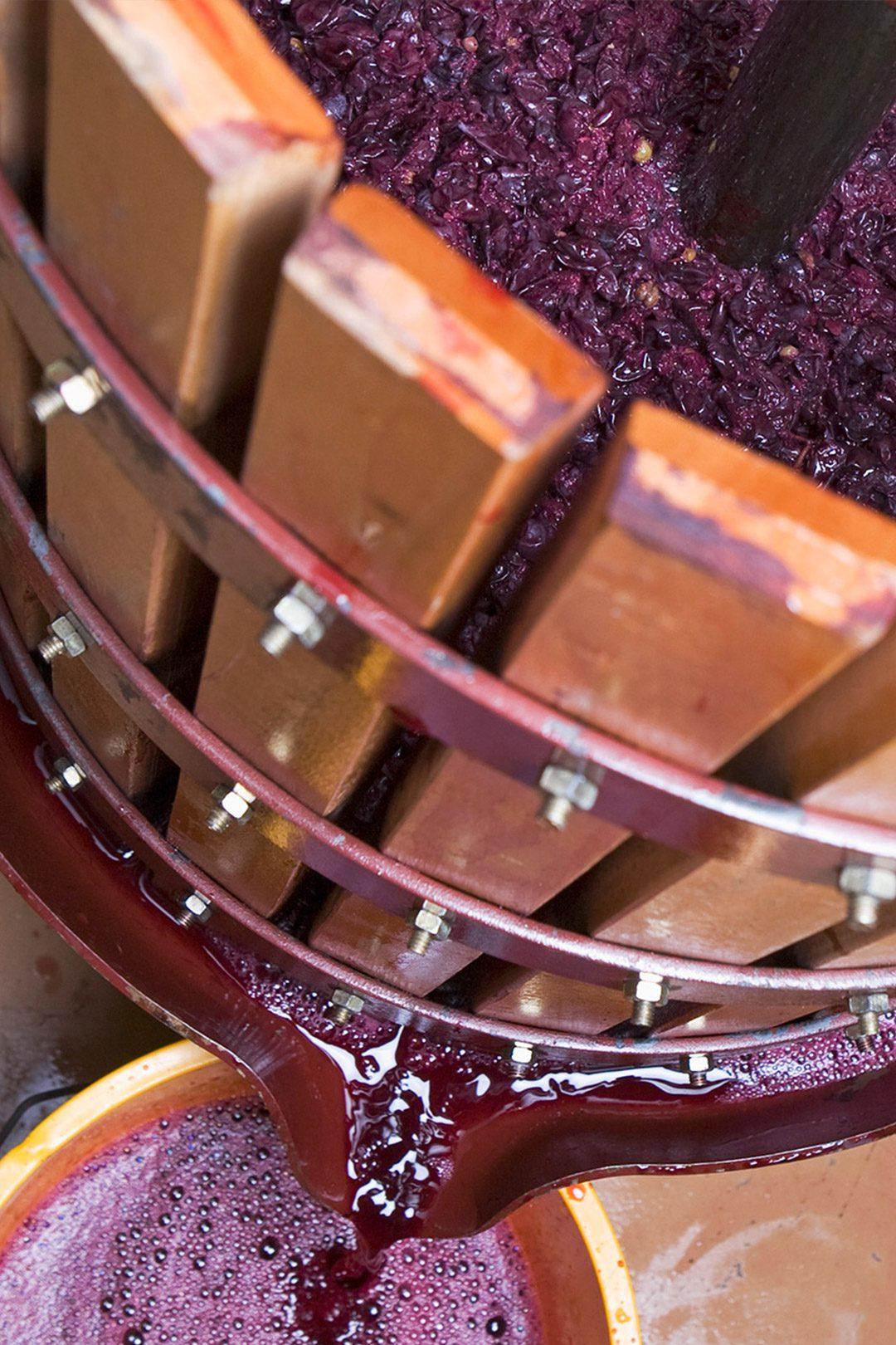lieviti vino lieviti del vino fermentazione alcolica